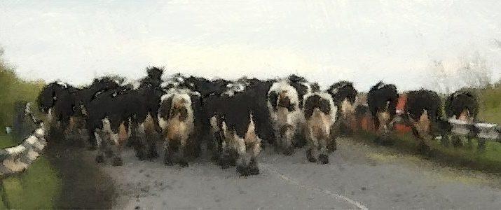 коровы на дороге, дтп, скорость, ограниченная видимость